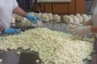 Produzione di cipolline in agrodolce